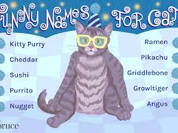76 funny names for cats