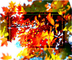 Download Free Picture Beautiful Leaves Powerpoint Website