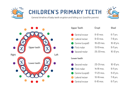 Teeth Age Chart Patient Education Pediatric Dentist In Chillicothe