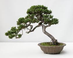 1000 images about art tree references on pinterest bonsai trees pine tree and how to draw trees bonsai tree