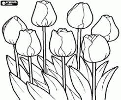 Kleurplaat Tulpen In Het Veld Kleurplaten