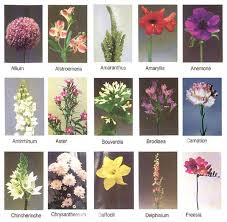 types of flowers with names. names of all different types flowers with d