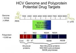 Hepatitis C Practice Essentials Background Pathophysiology
