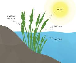 Dissolved Oxygen Environmental Measurement Systems