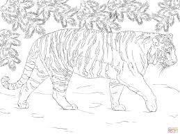 Siberische Tijger Kleurplaat Gratis Kleurplaten Printen