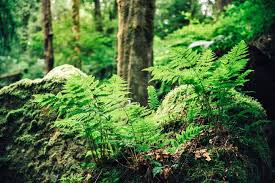 How to Grow and Care for Ferns | Gardener's Path