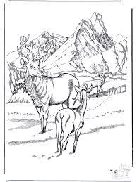 Hert In De Sneeuw Kleurplaten Winterdieren