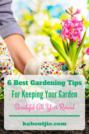 6 best gardening tips for keeping your garden beautiful all year round kaboutjie