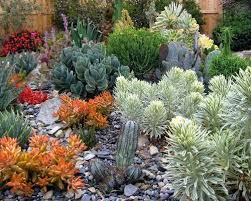 Small Picture Cactus Garden Ideas Houzz