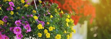 gardening express voucher codes