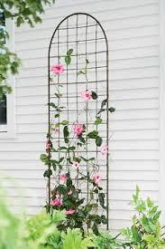 Garden Design Garden Design With Buy Climbing Plants Online Climbing Plant Trellis