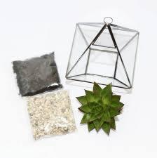 geometric glass vase green succulent terrarium components
