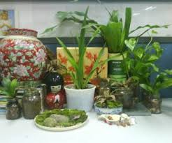 perfect office plants. Perfect Office Plant Ideas Ingenuity Design Large Plants Desk Flowers Small Common L