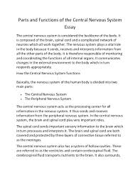 parts and functions of the central nervous system essay parts and functions of the central nervous system essay the central nervous system is considered the
