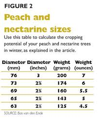 Prune For Size Good Fruit Grower