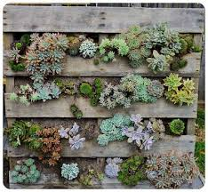 Small Picture Best 25 Succulent wall ideas on Pinterest Succulent wall