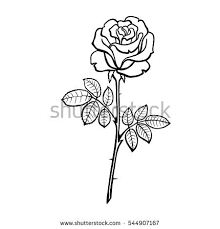 vector ilration of roses line drawing coloring book