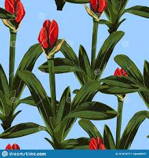 Lilybud Gardens By Design Tropical Red Lily Bud Flowers With Leaves Blue Background