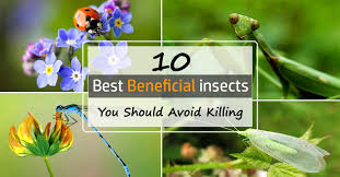 Beneficial Insects Chart 10 Most Beneficial Garden Insects You Should Avoid Killing