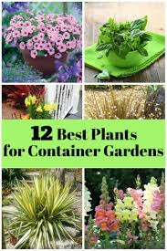 best garden plants. Who Says You Need A Large Yard To Have Garden? Enjoy The Beauty Of Best Garden Plants