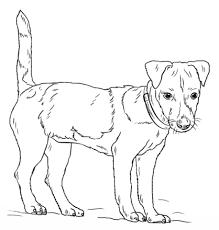 Jack Russell Terrier Kleurplaat Gratis Kleurplaten Printen