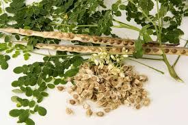 Cây chùm ngây là thảo dược gì? Công dụng & Liều dùng • Hello Bacsi