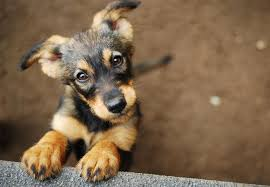 animal shelter pictures. Beautiful Pictures Puppy At Animal Shelter On Animal Shelter Pictures A
