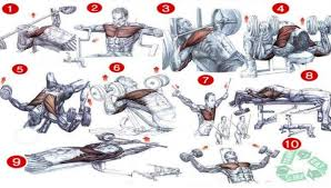 Chest Workout Chart Step By Step Chest Workout Chart Best Fitness Workout Healthy Body Fit