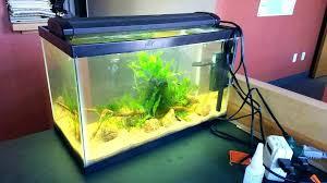 office fish. Desk Office Fish