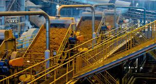 biofuels student energy biofuel