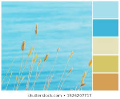 Rgb Color Chart Görseller Stok Fotoğraflar Ve Vektörler