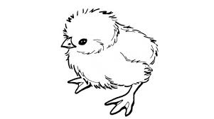 Small Picture 17 Inspiring Baby Chick Coloring Page Photo Gekimoe 69350