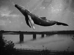 Игра Синий кит правда или массовая истерия портал kz Игра Синий кит правда или массовая истерия