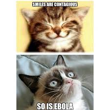 grumpy cat smiling is contagious. Wonderful Contagious Grumpy Cat Smile  Google Search Intended Grumpy Cat Smiling Is Contagious