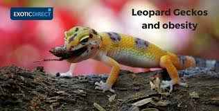 Leopard Gecko Food And Diet Advice Exoticdirect