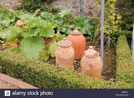 Kitchen Garden In Pots Rhubarb Forcing Pots In The Kitchen Garden At Arlington Court