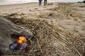 photo of glass floats on a beach along the historic taft district at lincoln city in oregon usa