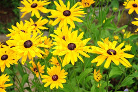 Common Yellow Garden Flowers Design Home Design Ideas