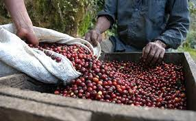 The beans were roasted over a fire, finely ground and then slowly cooked with water on the ashes of a charcoal fire. Coffee History Speeder Earl S Coffee