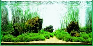 let s start with q choosing a tank aquascaping wiki aquasabi aquascaping
