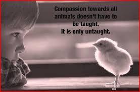 Compassion Quotes Custom Compassionate Quotes Meme's VaVaVoom Vegan Organic Recipes