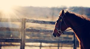 professional horse face photography. For Professional Horse Face Photography