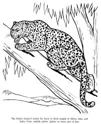 Animal Drawings Coloring Pages | Indian Leopard animal ...