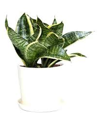 small plants for office. Plants For Office Desk Extremely Creative Plant On Small