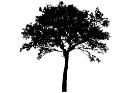 Download Tree Silhouette Free Png Transparent Image And Clipart