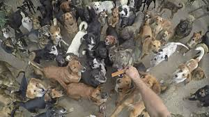 lots of dogs together. Exellent Lots Lots Of Dogs Eating Together In Peace Video Intended Of Dogs Together S