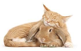cat and rabbit twins 5 jpg