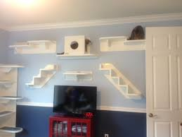 a tale of two kitties and their cat wall system