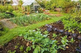 vegetable garden yield