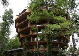 11 Of The Coolest TreehousesCoolest Tree Houses